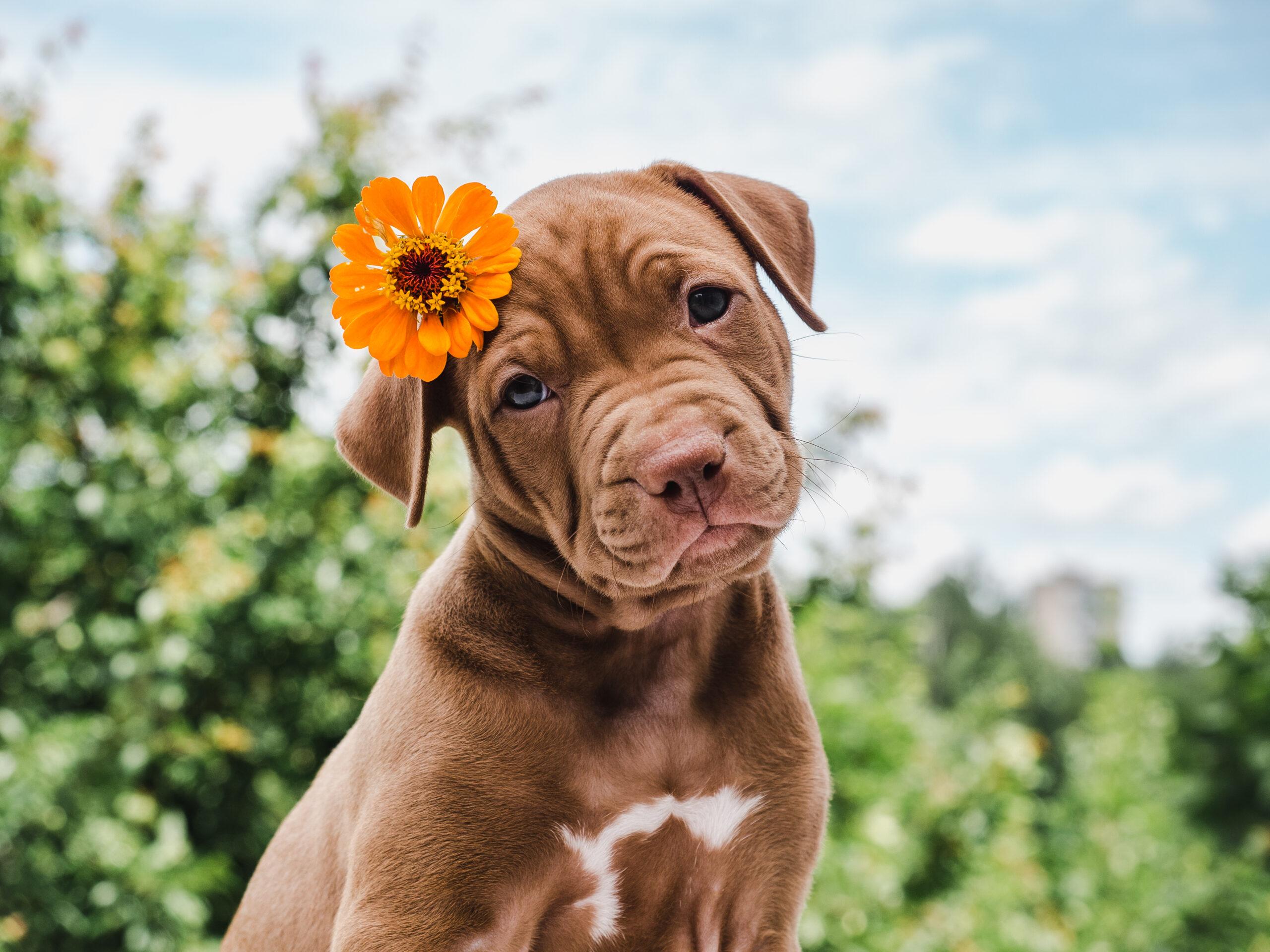 Vómitos y diarreas en animales de compañía
