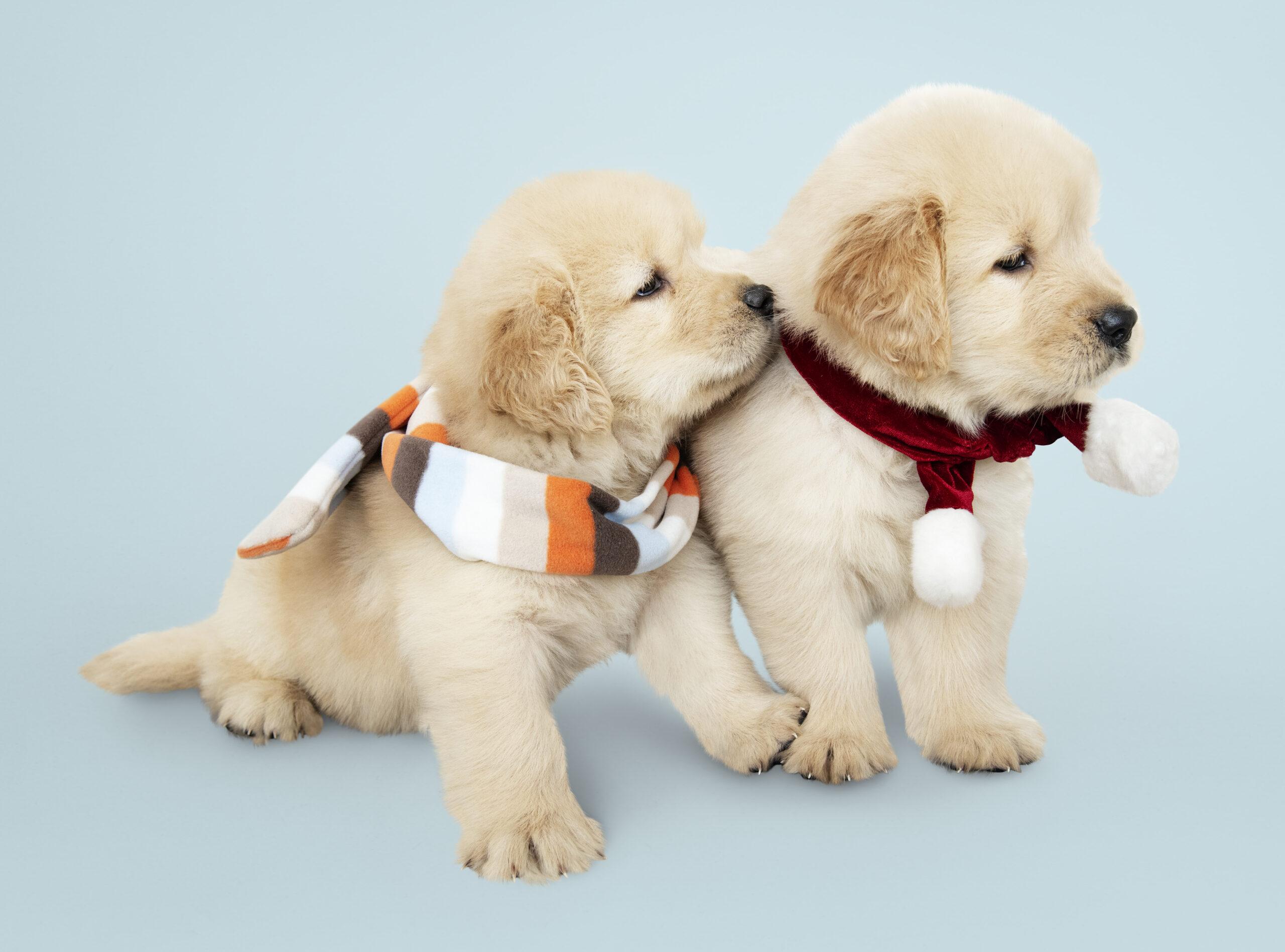 Socialización del cachorro