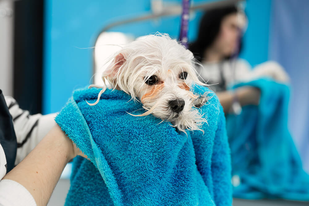 Limpieza de la hospitalización de animales infecciosos