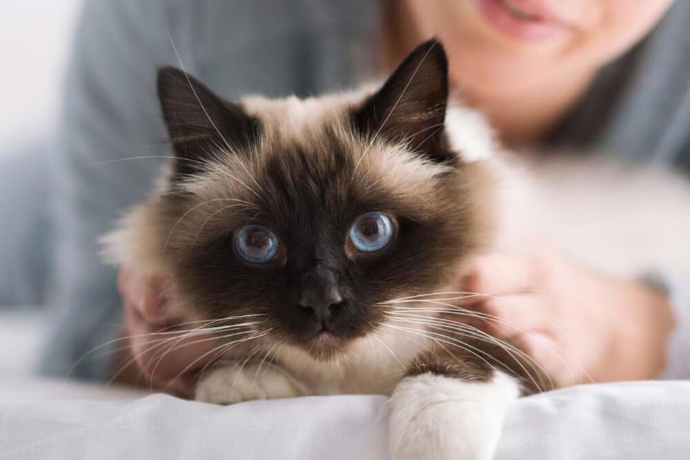 Beneficios de la alimentación húmeda en el gato