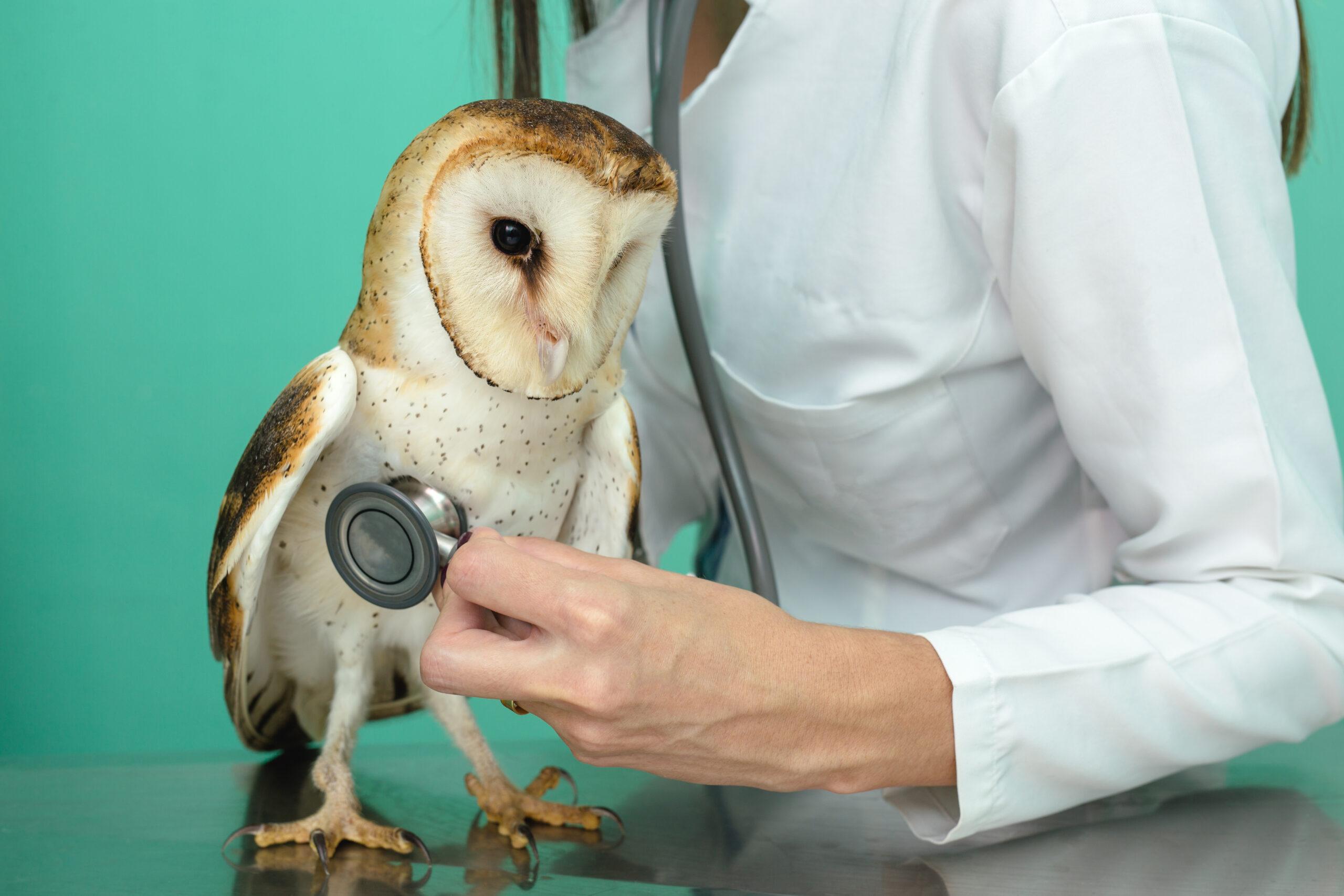 Manejo y cuidado de aves en la hospitalización