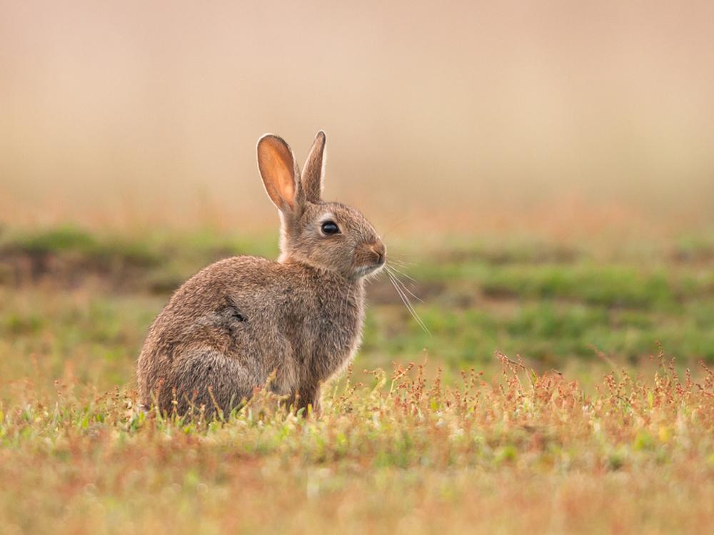 Comportamiento y enriquecimiento ambiental en el conejo