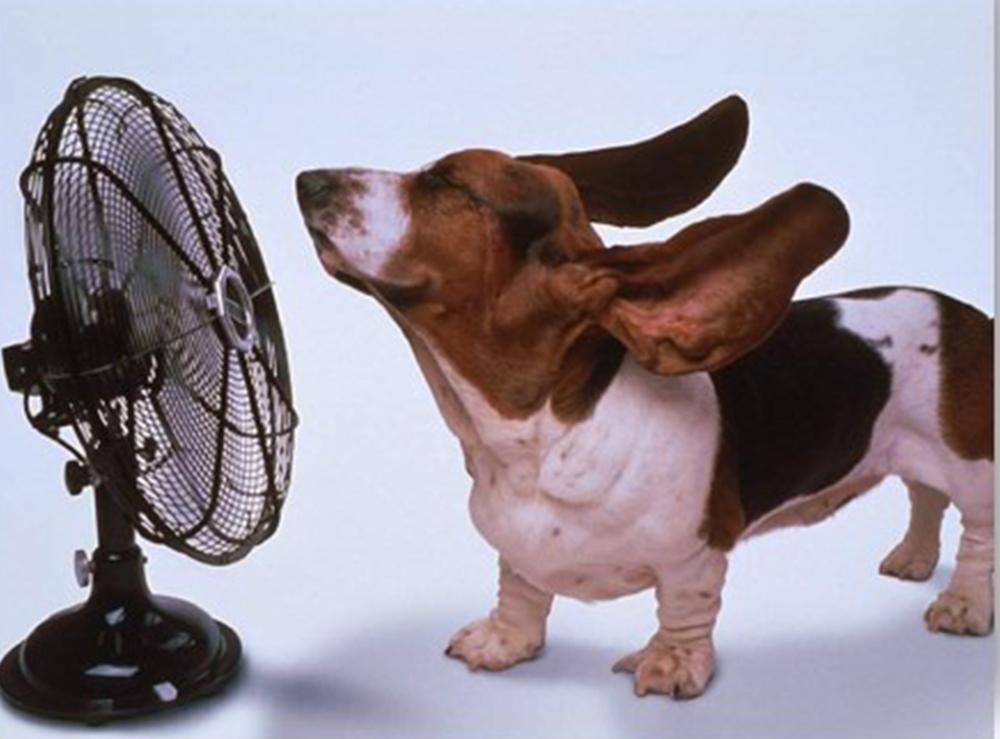 Golpe de calor: razas predispuestas, manejo y monitorización